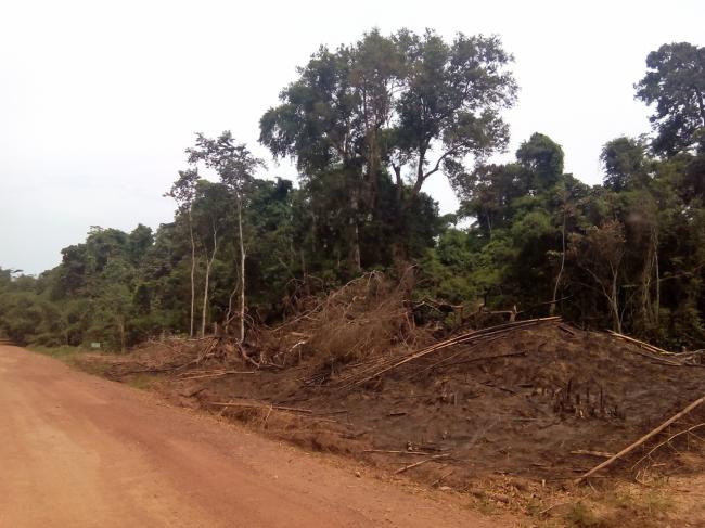 Ejemplo de deforestación de bosque primario en Ghana. El cartel que aparece abajo a la izquierda marca el final de un parque nacional. La deforestación para la plantación de cacao llega hasta esa misma línea. Foto: Sandra Goded.