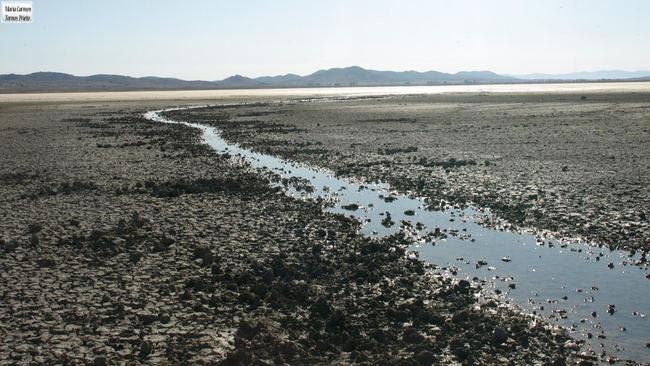 Arroyo de agua dulce de la Laguna de Gallocanta (Aragón). Foto: Carmen Tornos.